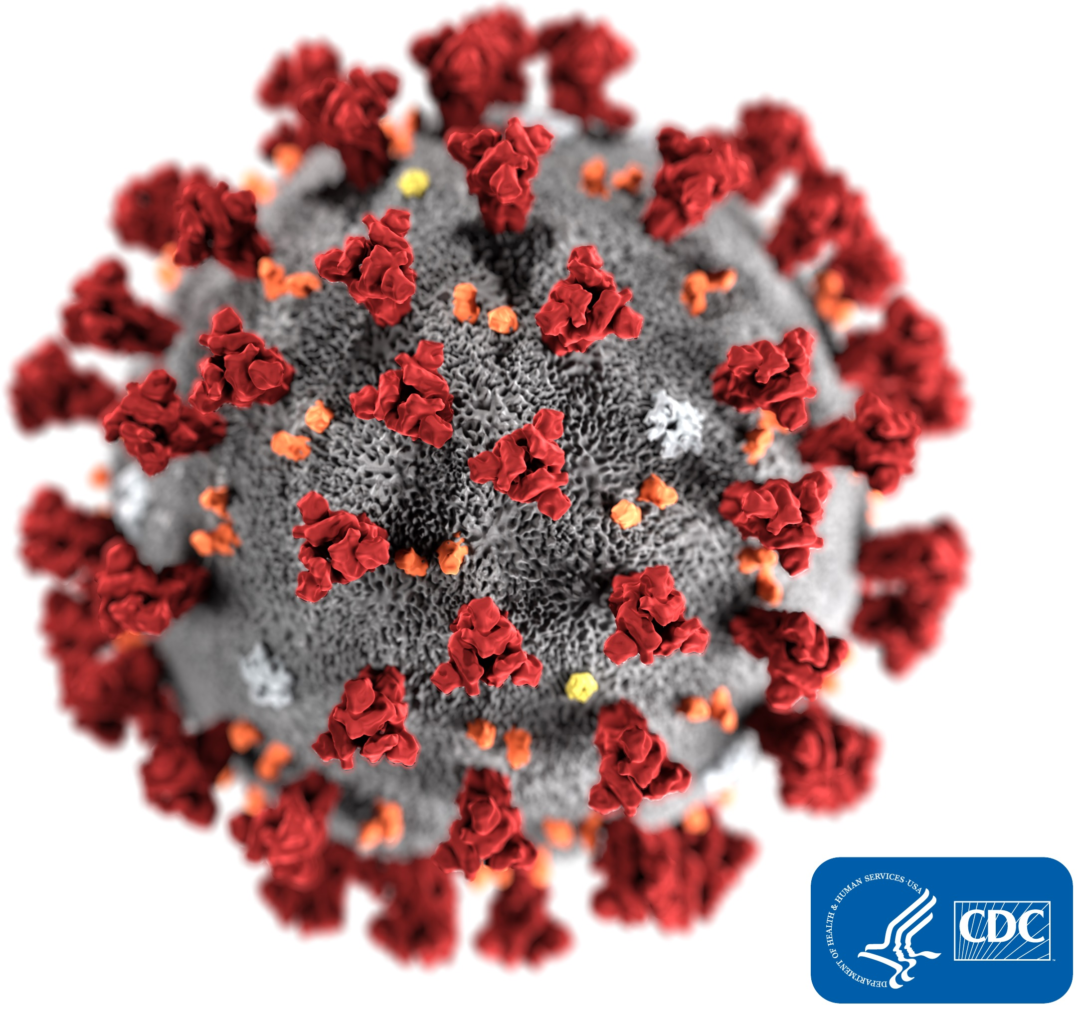 Colorful digital representation of a 2019 novel coronavirus molecule Opens in new window